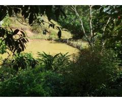 sitio medindo 6 alqueiro na região de PaivaMG
