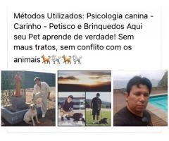 Adestramento de cães Nova iguaçu André Macedo