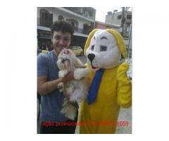 mascote cachorro personagem  para ação promocional
